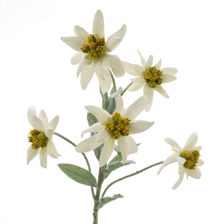 Planta sint/ética 40cm Blanco artplants.de Edelwei/ß de los Alpes Artificial Sophia con 5 Flores Leontopodium alpinum