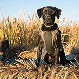 Browning Camo Neoprene Dog Vest | Mossy Oak
