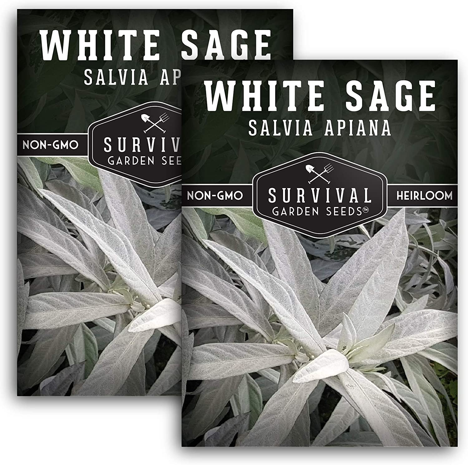 Survival Garden Seeds - White Sage Seed for Planting - Grow Your Own Smudging Incense - 2 Packets with Instructions to Plant and Grow Your Home Garden - Non-GMO Heirloom Variety