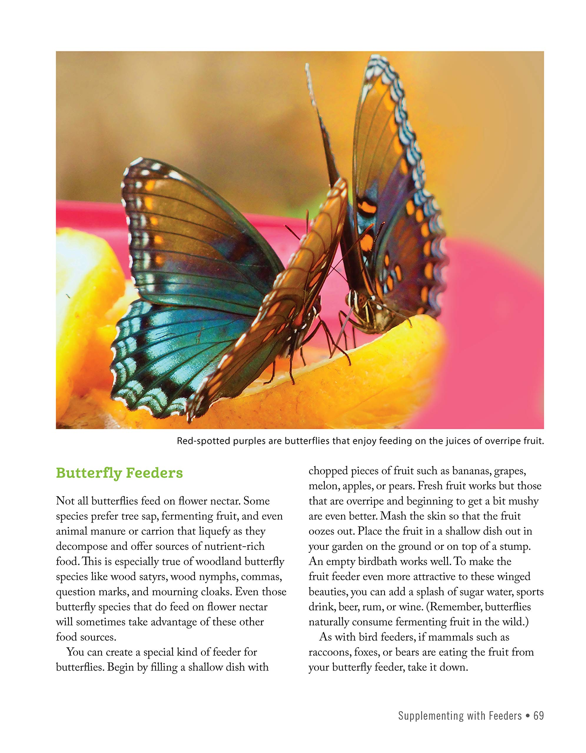 46ab17a77376 National Wildlife Federation(R): Attracting Birds, Butterflies, and Other  Backyard Wildlife, Expanded Second Edition (Creative Homeowner) 17 Projects  ...
