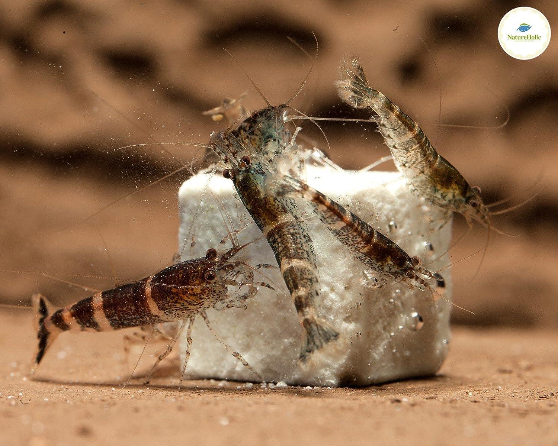 NatureHolic – Cubo mineral Pure Mineral – 47 ml – Piedras minerales para gambas, caracoles y cangrejos de acuario: Amazon.es: Productos para mascotas