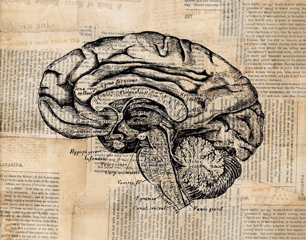 Amazon.com: Vintage Brain Print Anatomy Art Antique Medical Diagram ...