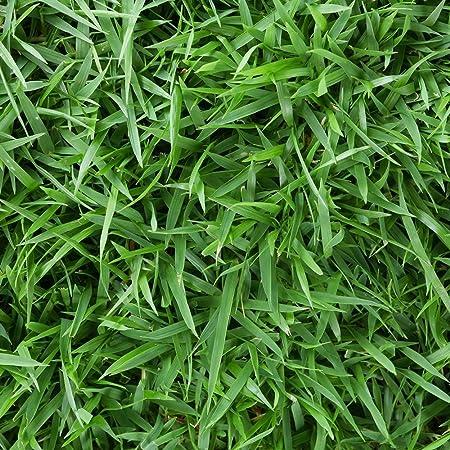 Amazon Com Harmony 500 Sq Ft Zoysia Sod 1 Pallet Garden Outdoor