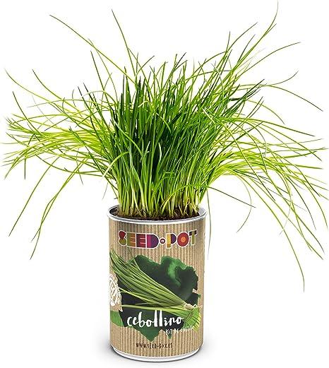 SeedBox PGPTCA Lata de cultivo cebollino, 0.7x0.7x9 cm: Amazon.es ...