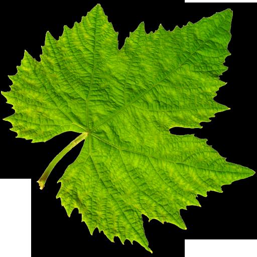 Vinooracle Wine Guide