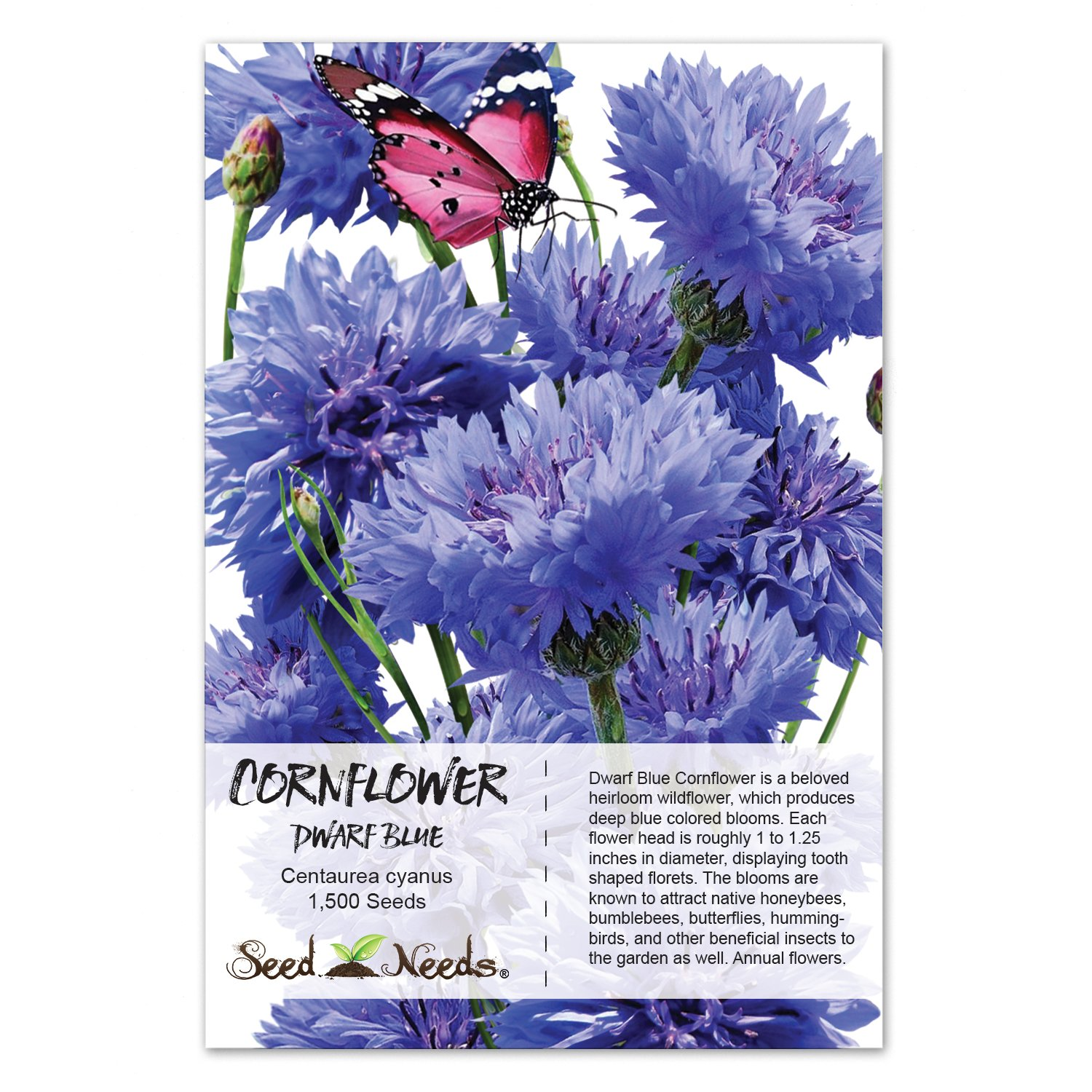 Amazon Package Of 1 500 Seeds Dwarf Blue Cornflower