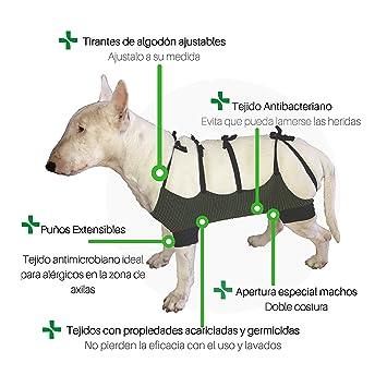 Faja Abdominal para Perros y Gatos, Talla M: Amazon.es: Productos para mascotas