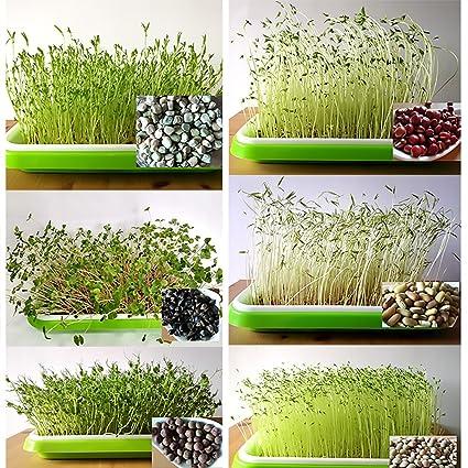 Výsledok vyhľadávania obrázkov pre dopyt double -deck sprout seedling dish
