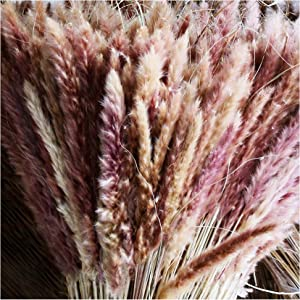 35pcs Dried Small Pampas Grass Plants-18'' Tall Pampas Grass Decor Fluffy Stems -Full and Fluffy. Perfect Addition to Home Office Wedding Decor. Hand-Picked, Carefully Packaged! (Natural Brown)
