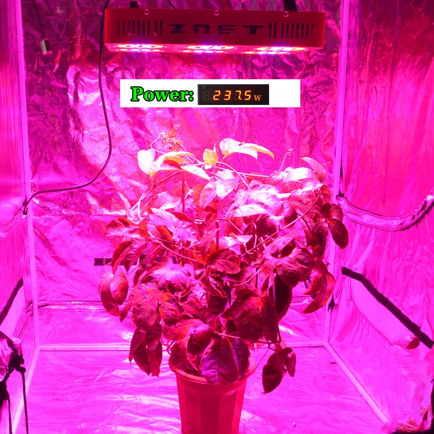 Amazon 400w hps replacement znet6 daisy chain full spectrum amazon 400w hps replacement znet6 daisy chain full spectrum led grow light for indoor growing medical plants garden outdoor parisarafo Image collections