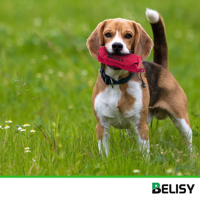 BELISY Set 3 en 1 de Juguetes Caninos | Bola de Masticación + Dispensador de Premios + Funda de Adiestramiento con Alimentos | Herramienta Educativa para ...