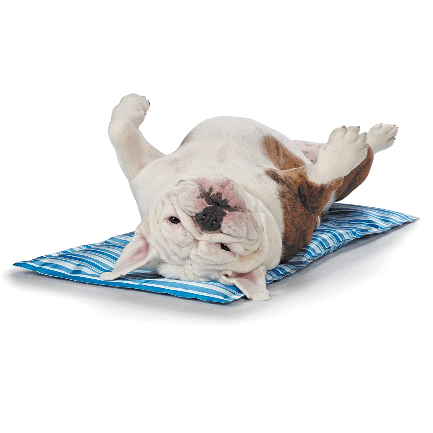 jw in place mat food company ca stay may pet supplies colors vary amazon dp
