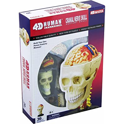 Tedco Human Anatomy Cranial Skull: Toys & Games