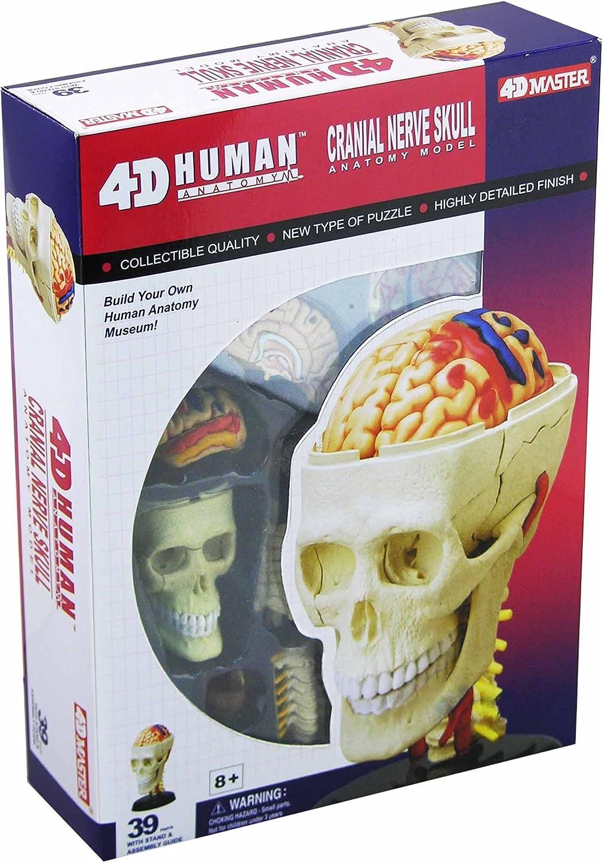 Amazon Tedco Human Anatomy Cranial Skull Toys Games