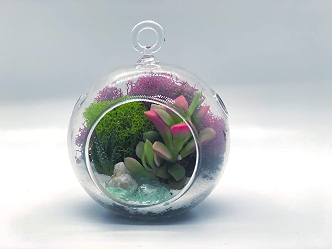 Reindeer Moss and Rocks *DIY Terrarium Plant Kit* Creations by Nathalie Holiday Decorations Kids Christmas Holiday Ornament Terrarium with Live Air Plant 5 Acrylic Globe Metal Stand