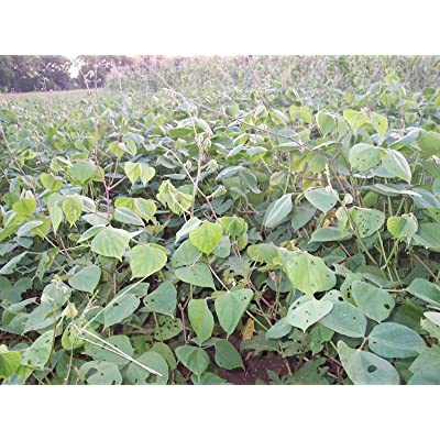thaisan7 Seeds Deer Food Plot Garden - 5 Pounds : Garden & Outdoor