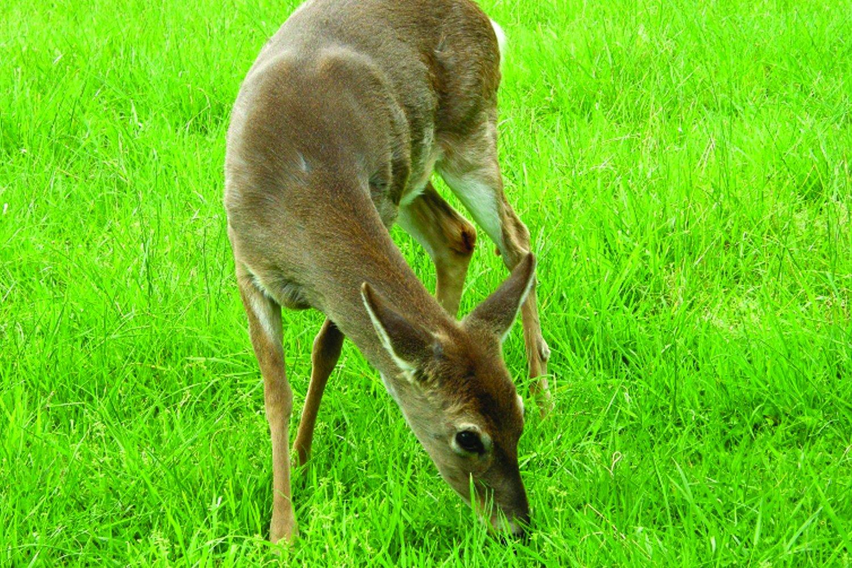 Southern Subtropics Big Game Food Plot Pasture Blend (1 acre)