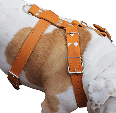 Dogs My Love Piel auténtica de Color marrón Perro arnés Grande. 30 ...