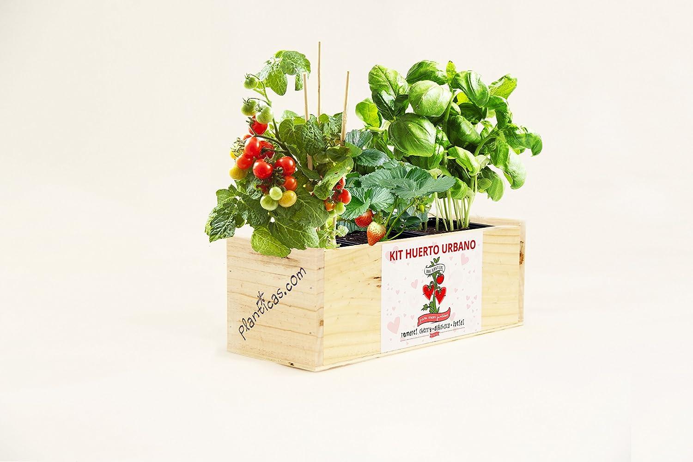 Kit de Huerto Urbano para Enamorados: Tomates Cherry, Albahaca y ...