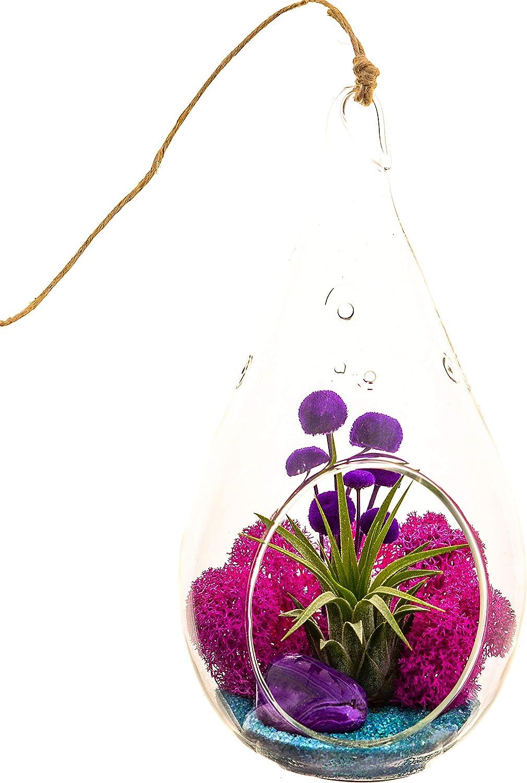 pressed flower octagon 12 colors terrarium blue pink orange white lavender red brown purple QUEEN ANNE/'S LACE terrarium pendant