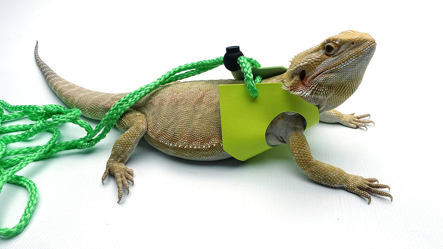 Large Ogle Lizard Leash, Limited Edition Fluorescent Yellow (Large)