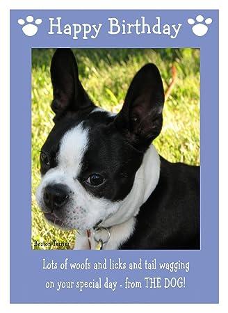 Boston Terrier Dog Birthday Card Amazon Office Products