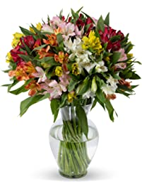Benchmark Bouquets Assorted Peruvian Lilies, With Vase (Fresh Cut Flowers)