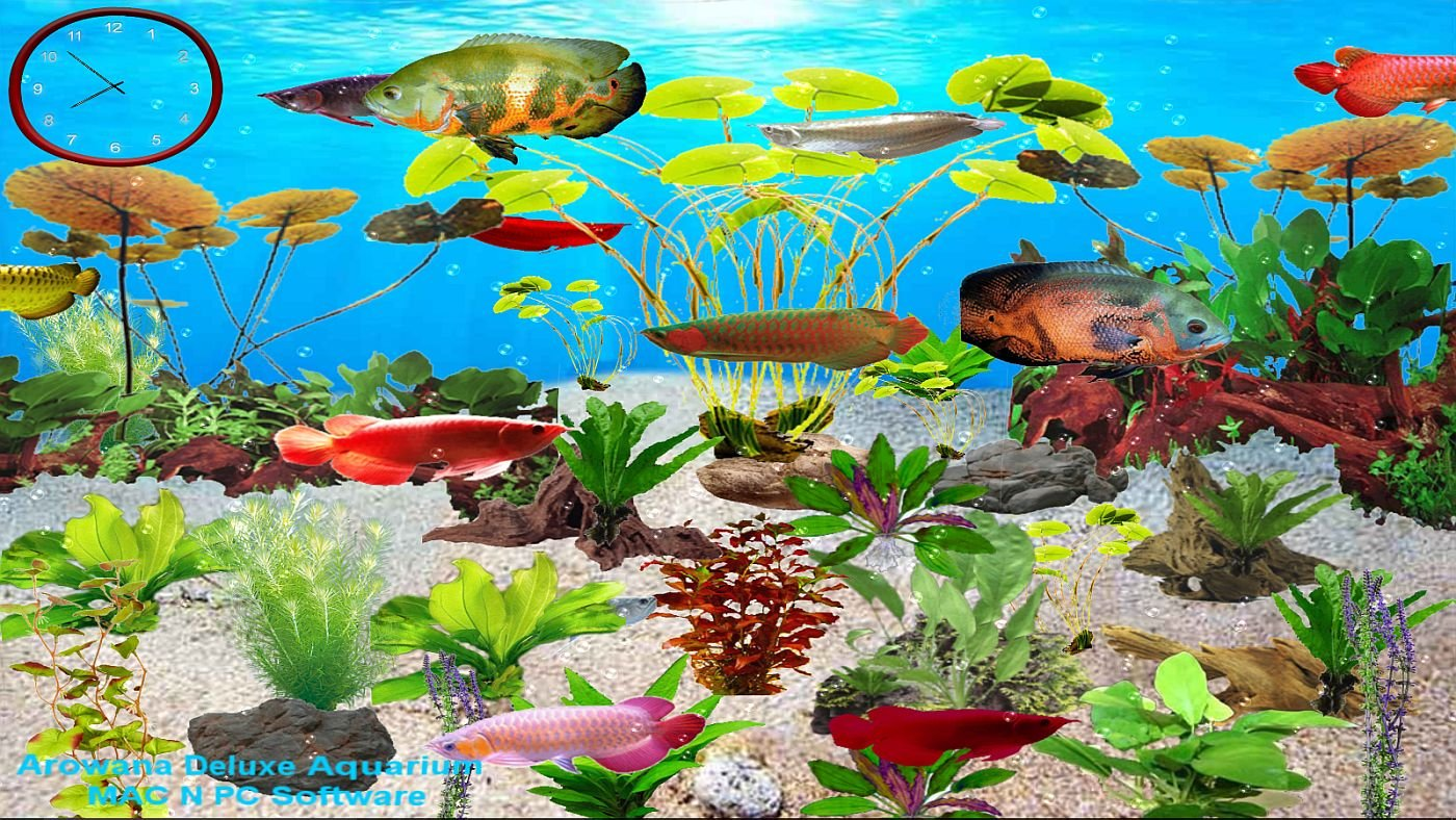Aquarium Deluxe Game (Arowana Deluxe Aquarium [Download])