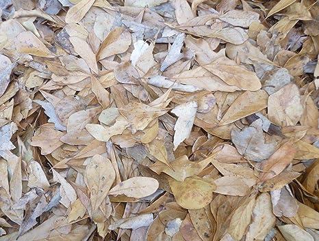 Amazon.com: Bolsa de galón #1 de madera de roble orgánica ...