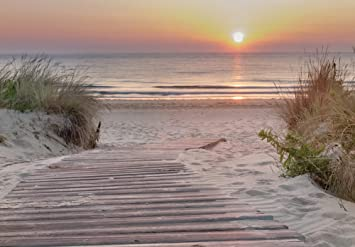 -Strand Küste Gras Meer Bäume Blumen Wiese Nordsee 519V VLIES Fototapete-DÜNEN-