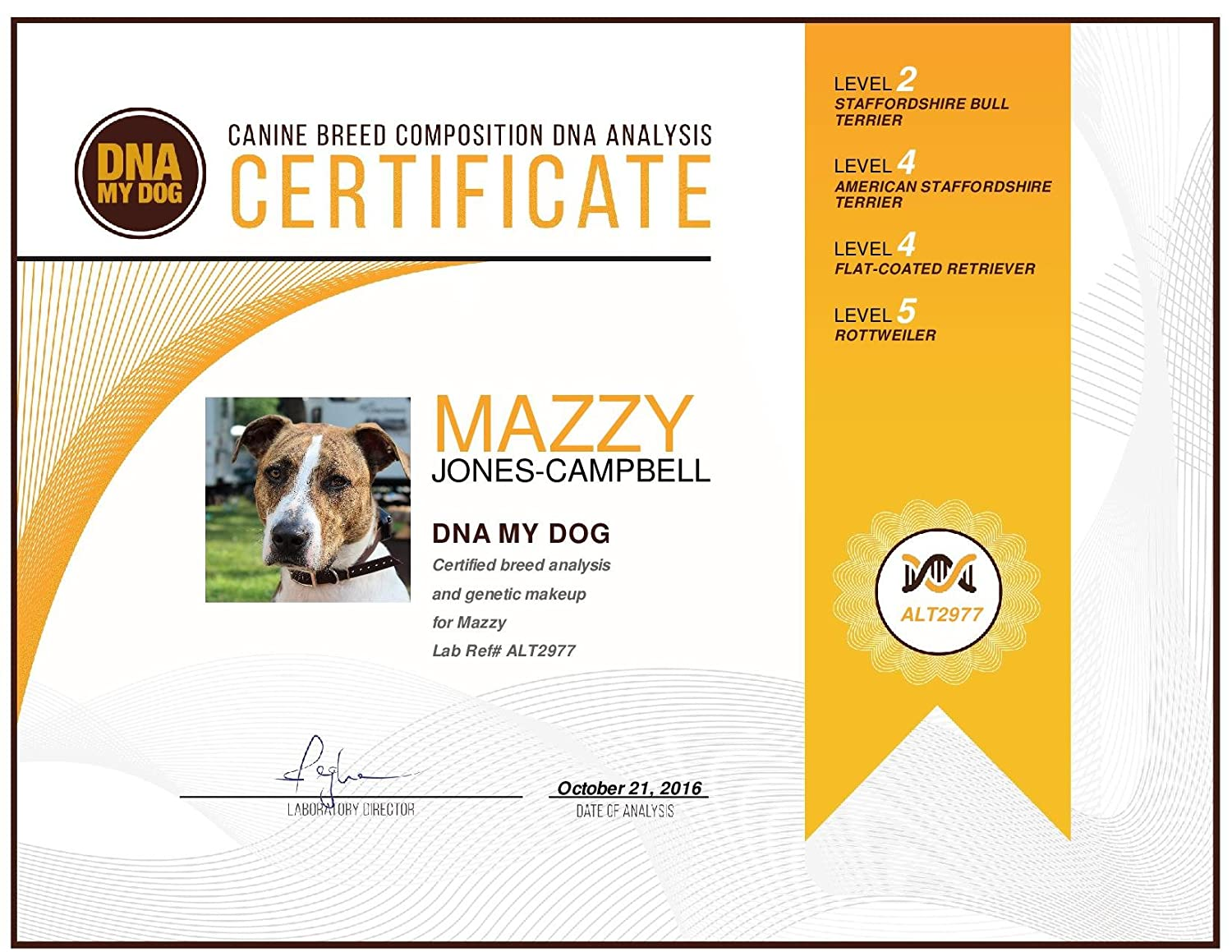 Amazon dna my dog canine breed identification test kit amazon dna my dog canine breed identification test kit at home cheek swab kit personality traits by dna my dog pet supplies 1betcityfo Image collections