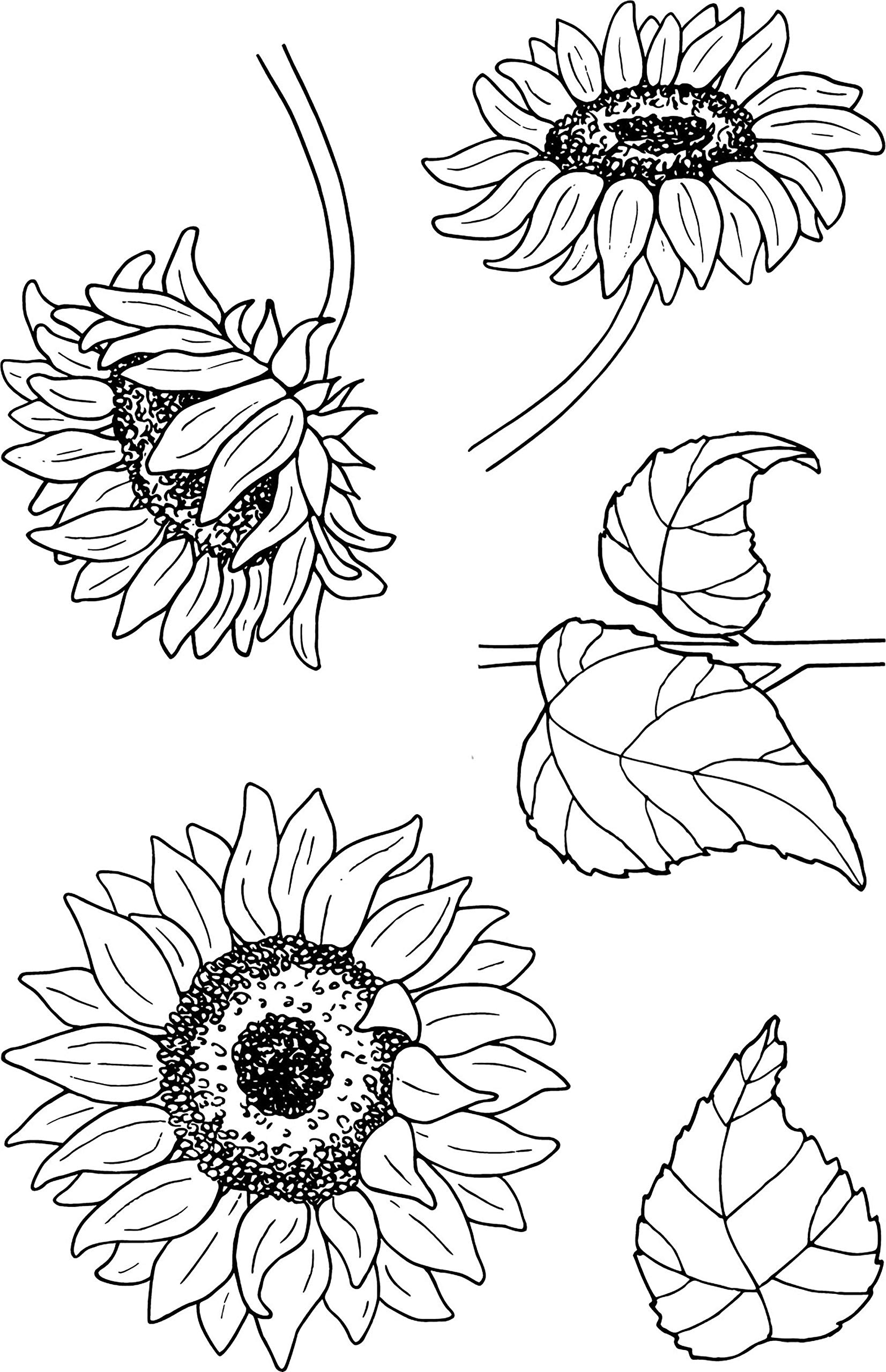 Jane's Doodles Clear Stamps 4''x6''-sunflowers by Jane's Doodles (Image #1)