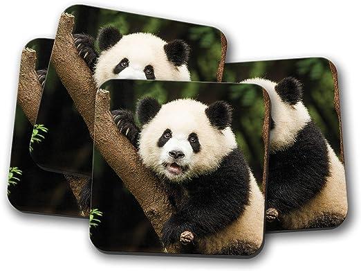 Bear Cub Animal Wild China Zoo Cool Fun Gift #14565 Cute Baby Panda Coaster