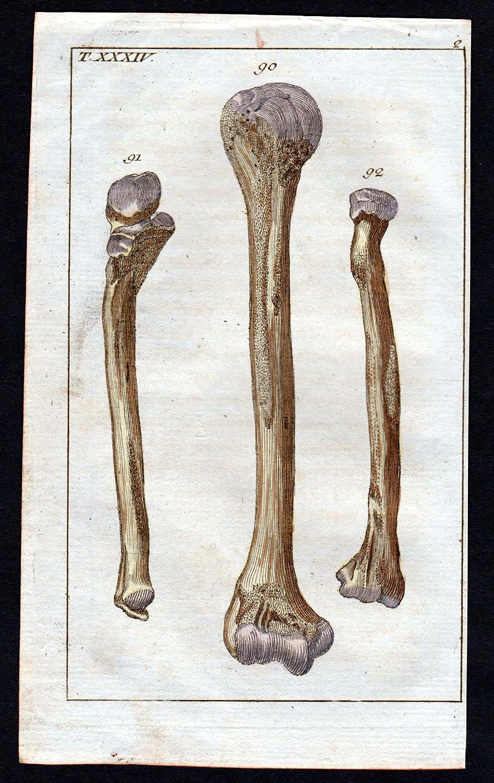 Großartig Knochen Arm Anatomie Galerie - Physiologie Von ...