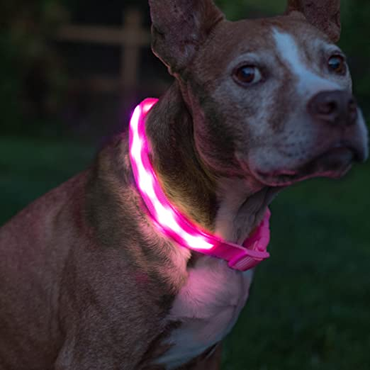 Blazin' Safety LED Dog Collar – USB Rechargeable with Water Resistant Flashing Light – Medium Pink