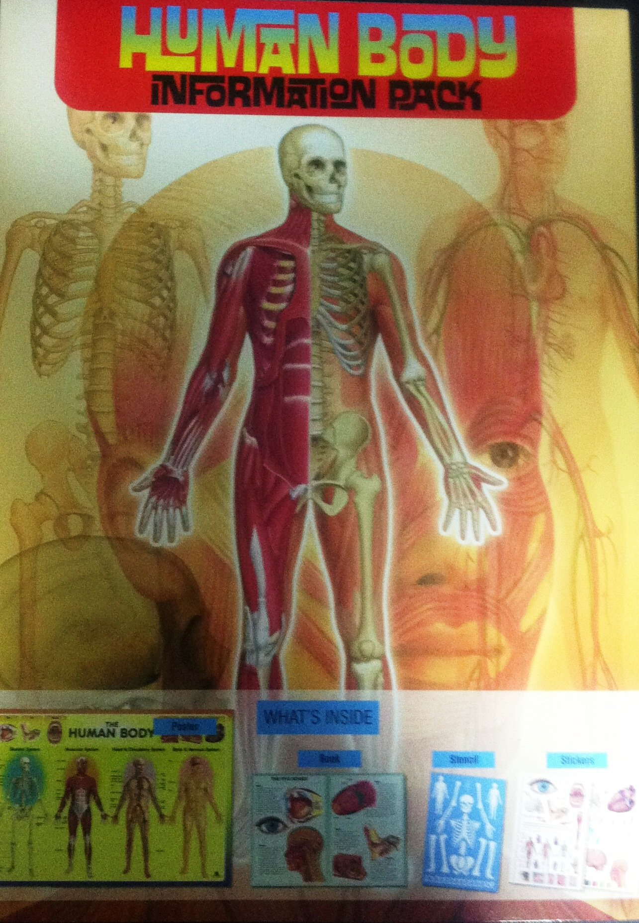 Human Body Information Pack ebook