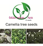 Golden autumn farm- 10 Camellia Sinensis - Tea Tree - Rare Tropical Plant Tree Seeds