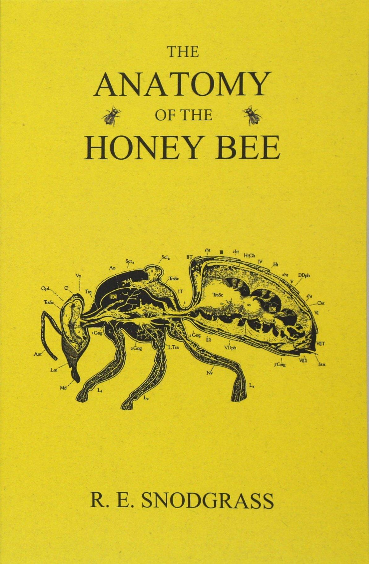 The Anatomy of the Honey Bee: Amazon.co.uk: R. E. Snodgrass ...