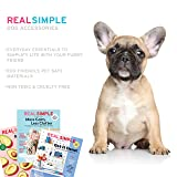 Real Simple Pet Collapsible Travel Dog Cat Bowl