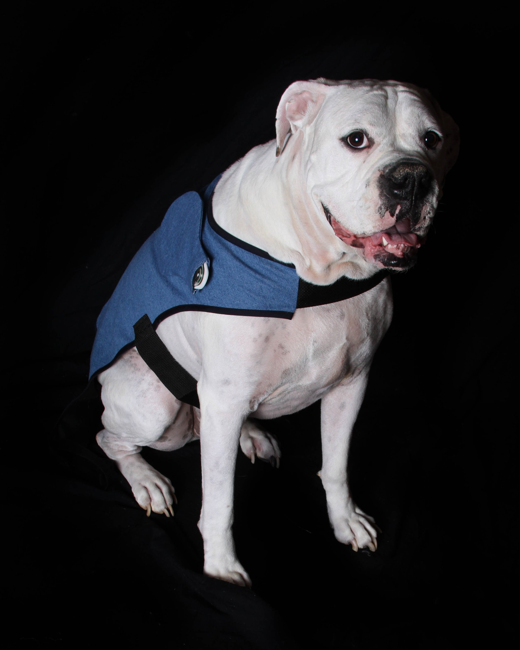 PetPatch Recovery Coat (Large)