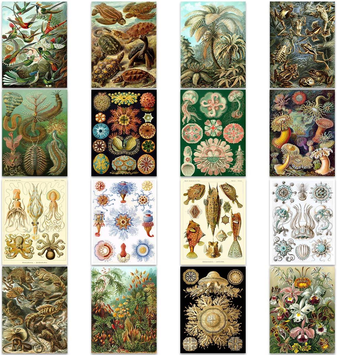 Ernst Haeckel Kunstformen Der Natur Nature Biology Wall Art Poster Pack of 16