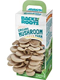 Back to the Roots Organic Mushroom Farm Grow Kit, Harvest Gourmet Oyster Mushrooms In 10 days, Top Gardening Gift...