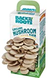 Back to the Roots Organic Mushroom Farm (Packaging May Vary)