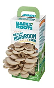 Back to the Roots Organic Mushroom Farm Grow Kit, Harvest Gourmet Oyster Mushrooms In 10 days, Top Gardening Gift, Holiday Gift, Unique Gift