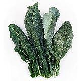 Kejora Fresh Organic Lacinato Kale 3 Bunches
