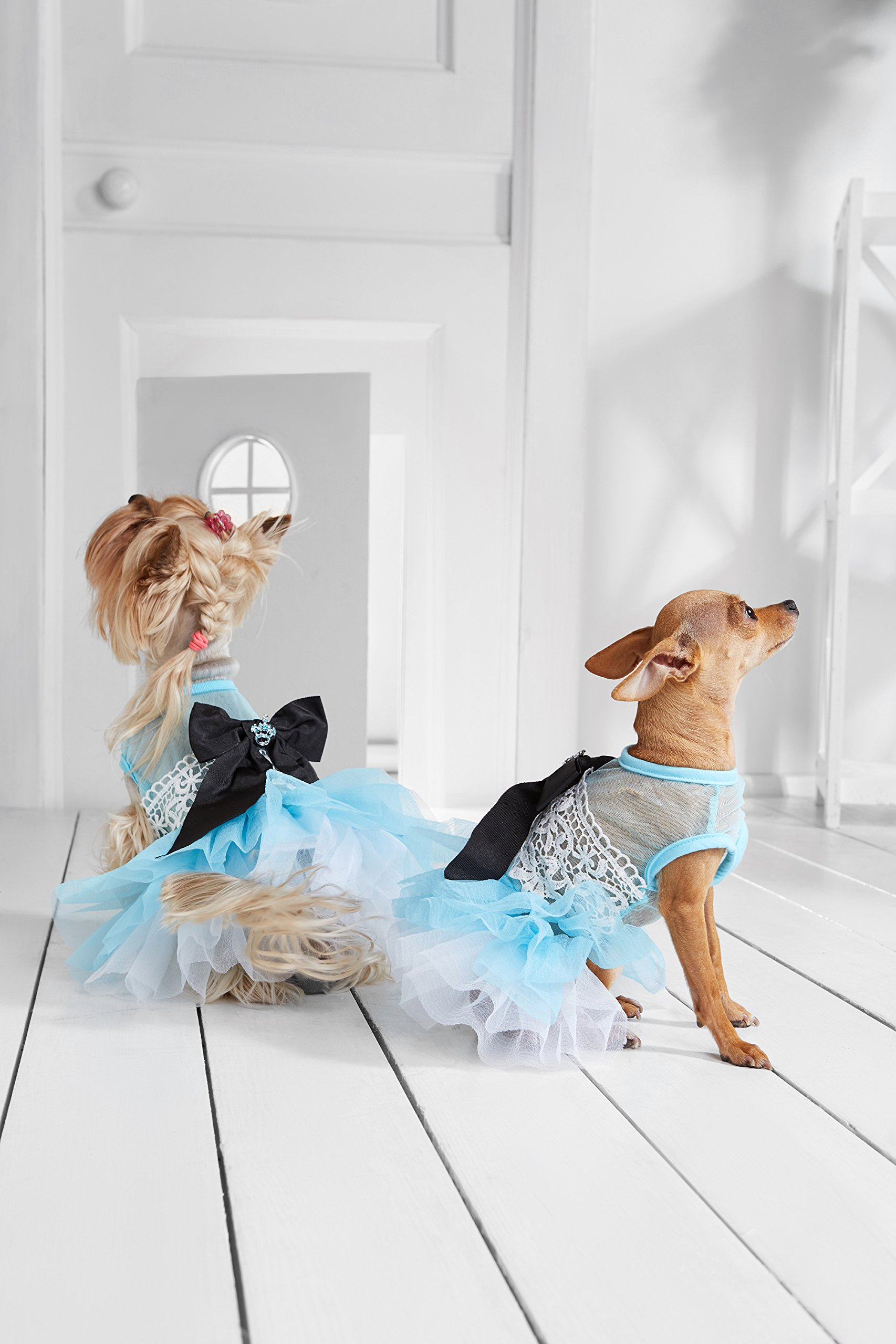 """Small Dog Tutu Dress With Bowknot Floral Lace 4 Layers Skirt Puppy Party Outfit (Toy Plus: 10"""" / 5-9 lbs, Blue)"""