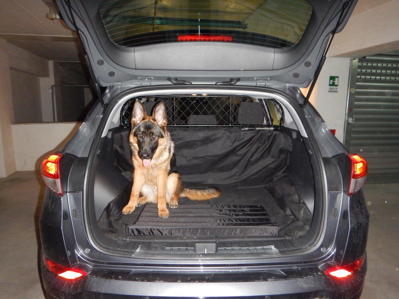 confortable para tu perro para perros y maletas Segura garantizada! Rejilla Separador protecci/ón Ergotech RDA65-XS16 khy017