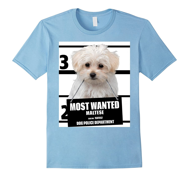 Amazon Most Wanted Maltese T shirt Dog Tee Shirts 13