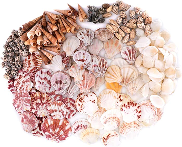 yarlung 2 Inch Mixed Beach Seashells with Plastic Box, Colorful Natural Seashells Supplies for Fish Tank, Home Decorations, Beach Theme Party, Candle Making, Wedding Decor, DIY Crafts