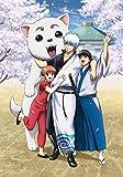 銀魂 銀祭り2019(仮)(初回仕様限定版) [DVD]